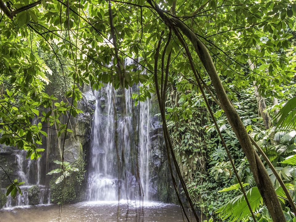 Waterfall, Nature, Landscape, Forest, Island, Paradise