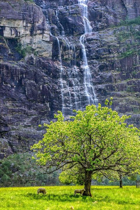 Mountain, Waterfall, Sheep, Landscape, Nature, Water