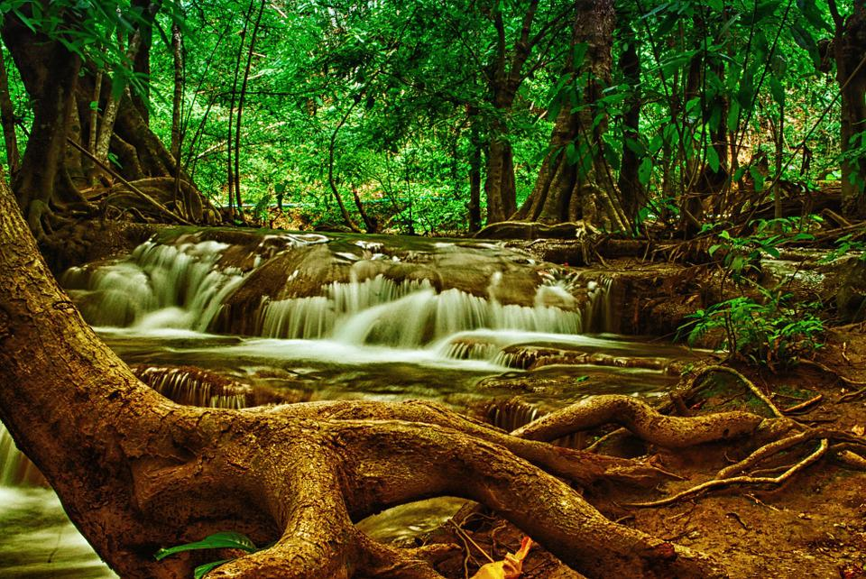 Tree, Waterfall, Forest, Nature, National-park