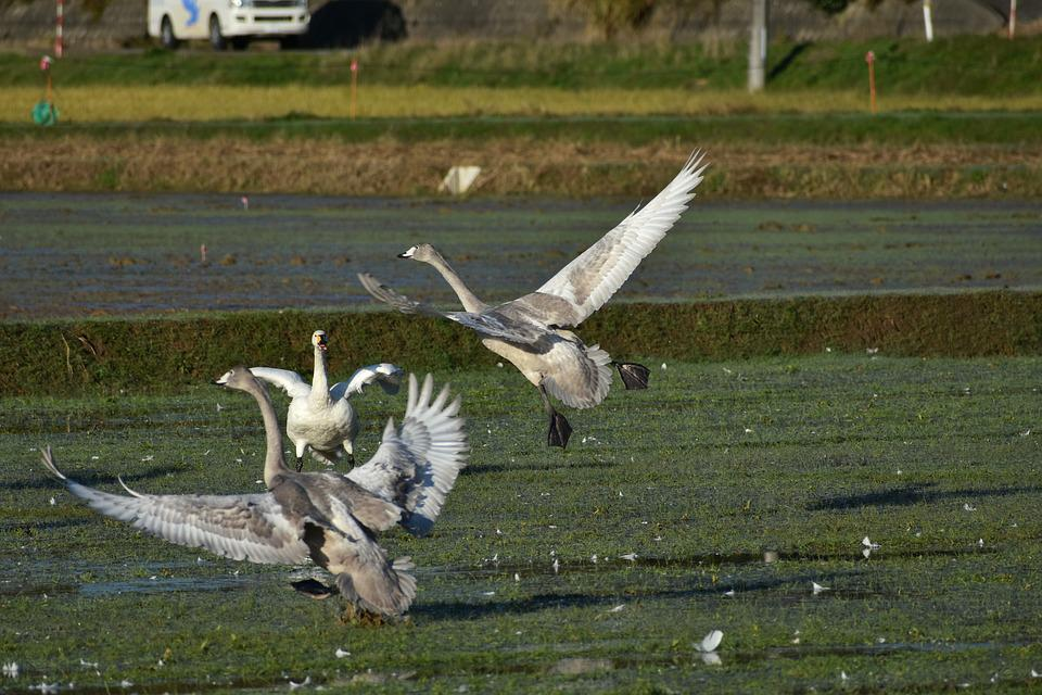 Animal, The Countryside, Bird, Wild Birds, Waterfowl