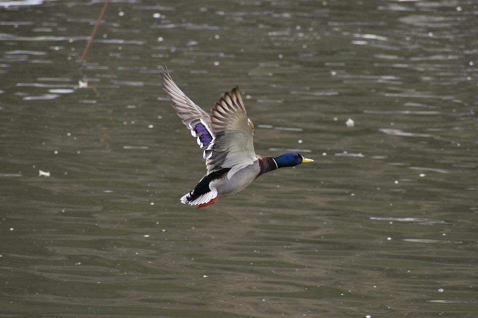 Animal, Lake, Waterside, Bird, Waterfowl, Wild Birds
