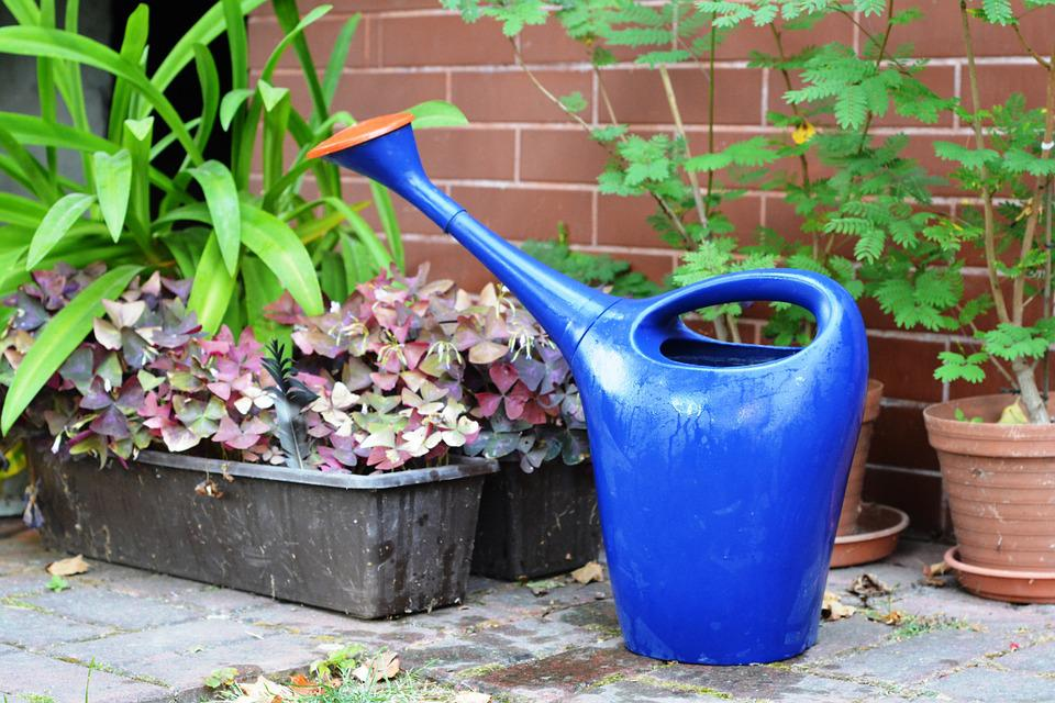 Watering Can, Watered, Watering, Plants, Water