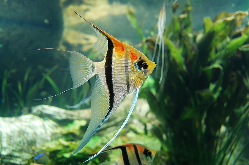 Underwater, Fish, Aquarium, Nature, Waters, Aqua Table