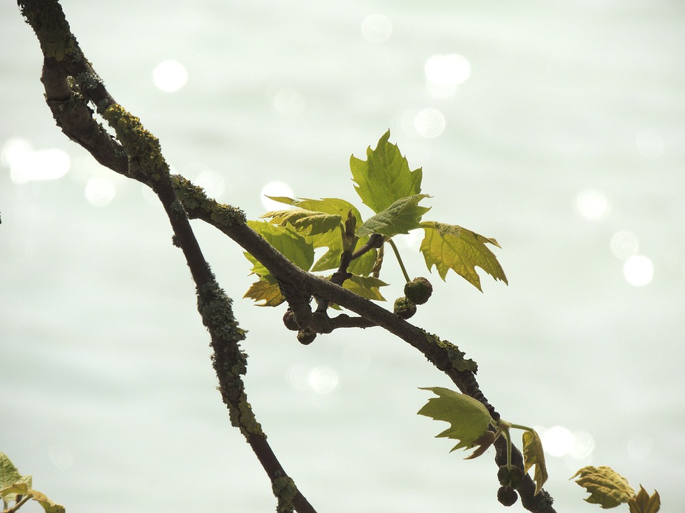Leaves, Branch, Lake, Lichtspiel, Plant, Waters, Nature