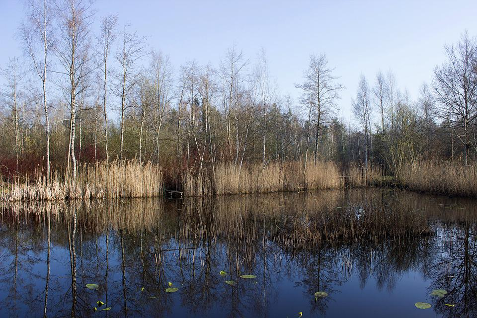 Riedsee, Waters, Mirroring, Water, Pond, Forest