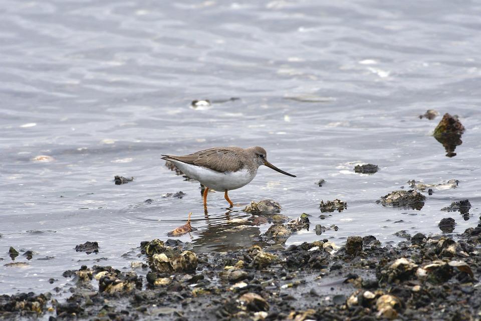 Bird, Waters, Beach, Sea, The, Solid Hashish Gear