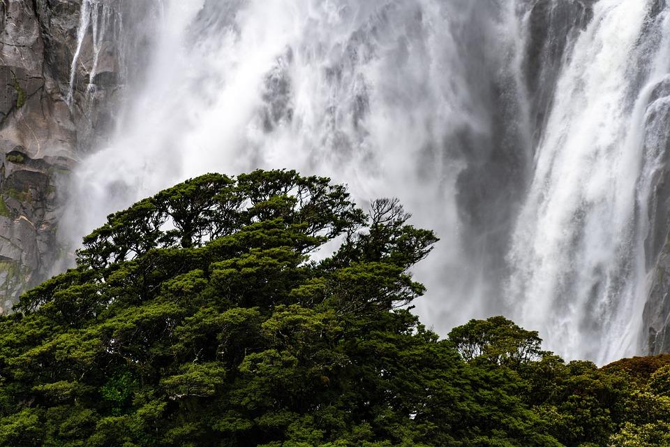 Waterfall, Tree, Waters, Scenery, Landscape, Mood