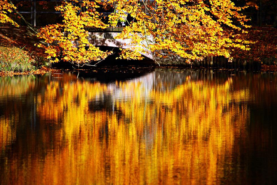 Fall Foliage, Autumn, Waters, Water, Mirroring