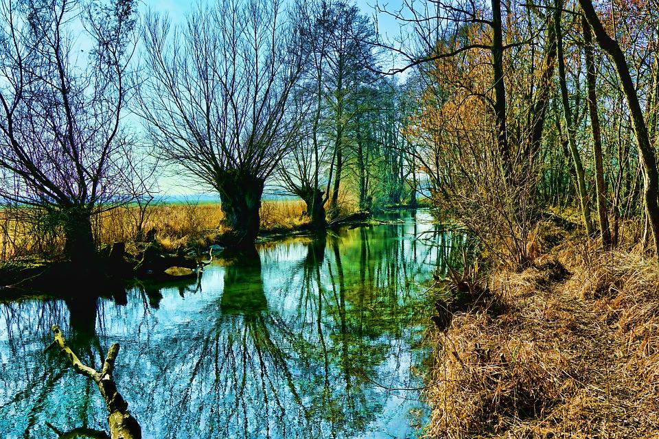 Nature, Tree, Waters, River, Wood, Winter, Reflection