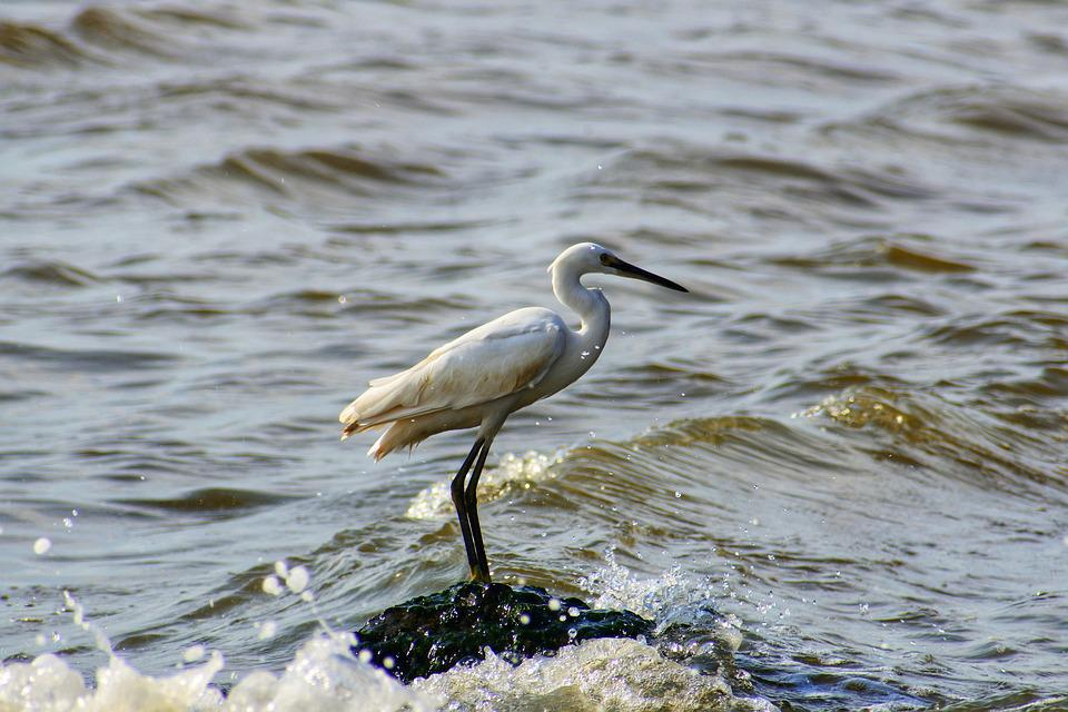 Animal, Sea, River, Estuary, Waterside, Wave, Foam