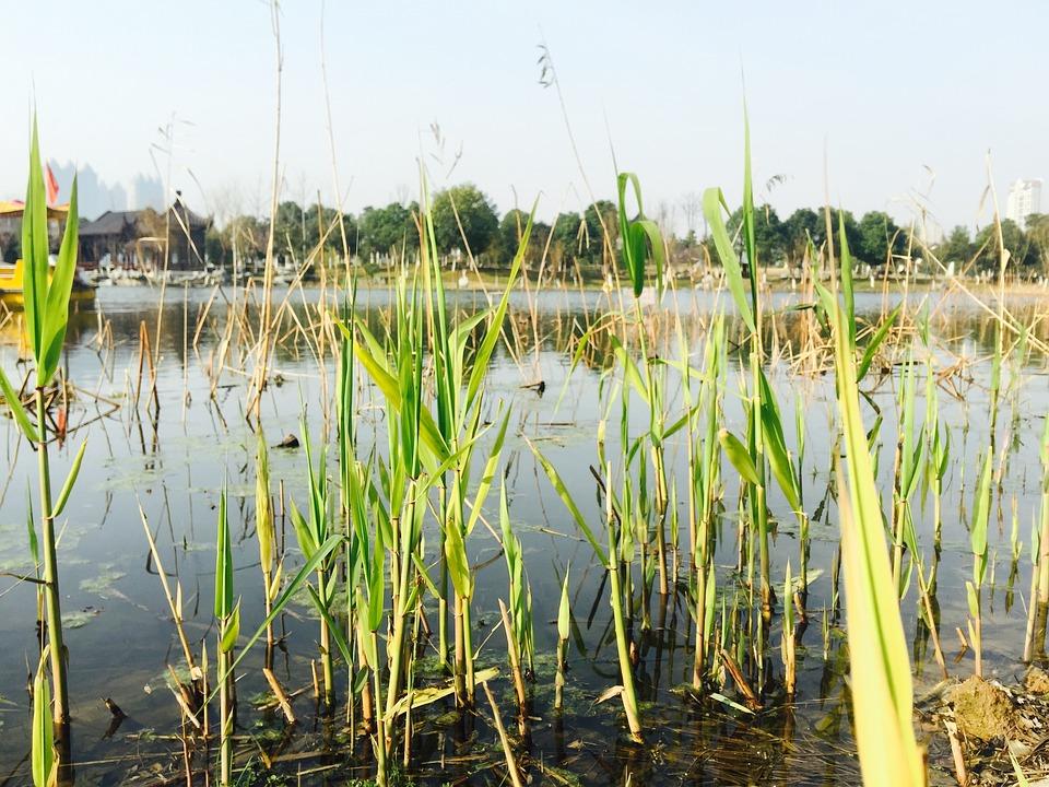 Wuhan, Sand Lake Park, Waterside Scene