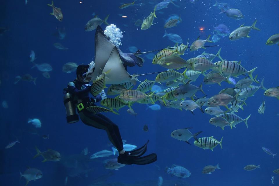 Stingray, Aquarium, Scuba, Divers, Waterworld, Sea