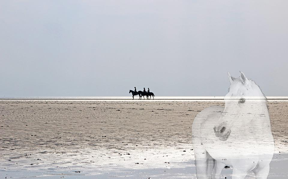 North Sea, Watts, Beach Horseback Ride, Horses