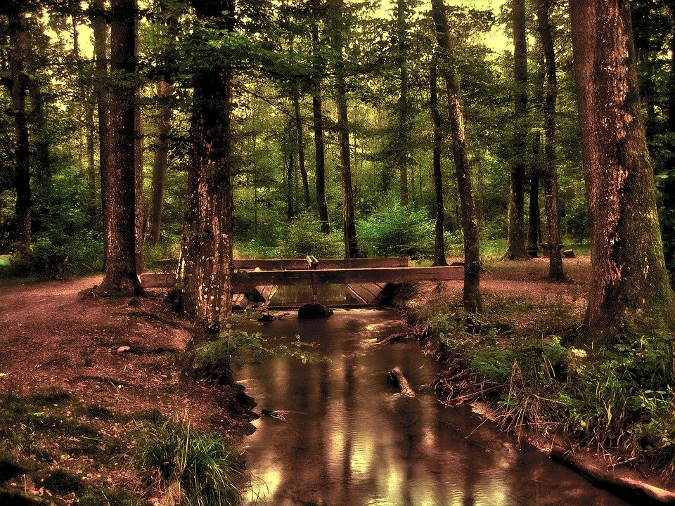 Forest, Tree, Bach, Watercourse, Wave, Bridge, Pool