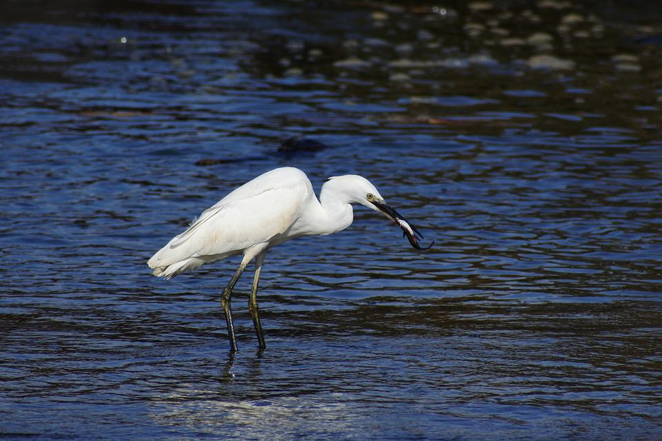 Animal, Sea, River, Estuary, Wave, Beach, Wild Birds