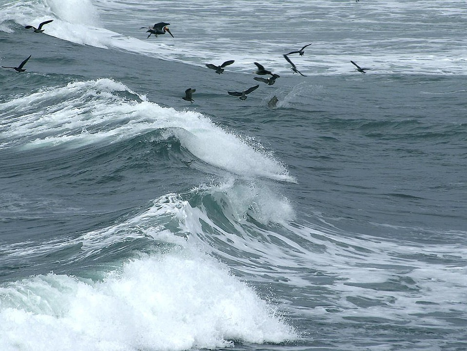 Wave, Birds, Flock Of Birds, Spray, Sea, Ocean, Wind