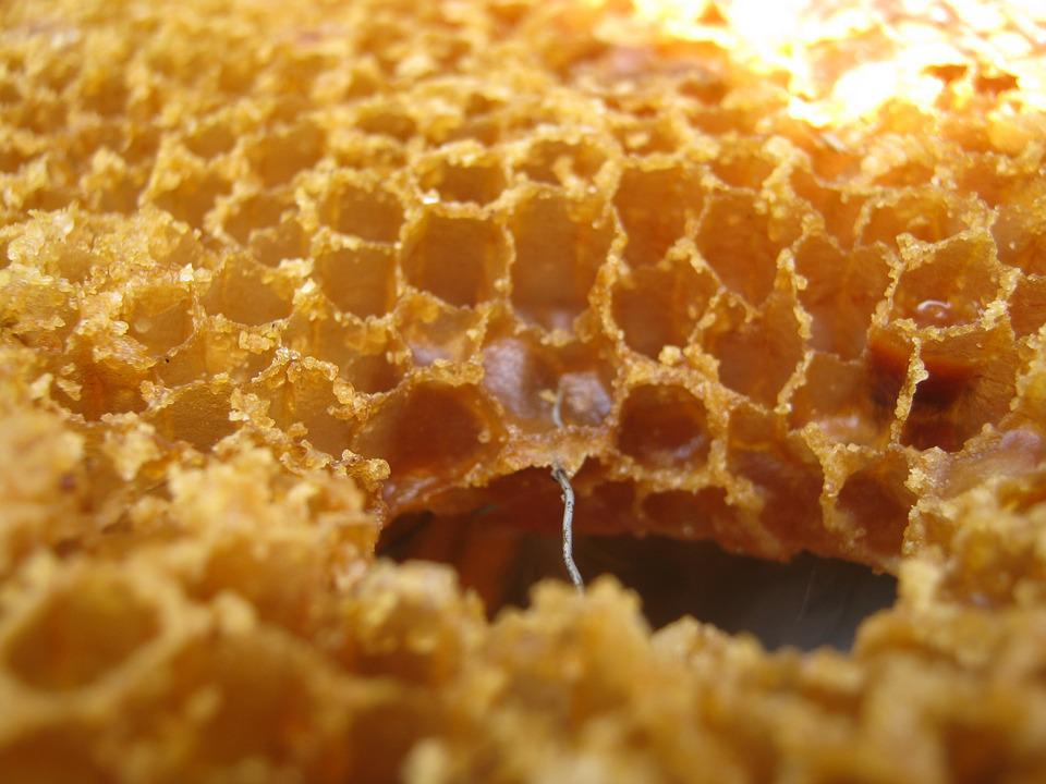 Wax, Radius, Bee, Alveoli, Reserves, Framework, Hive