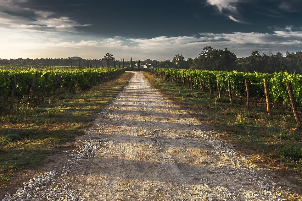 Road, Vineyard, Countryside, Way, Path, Country Lane