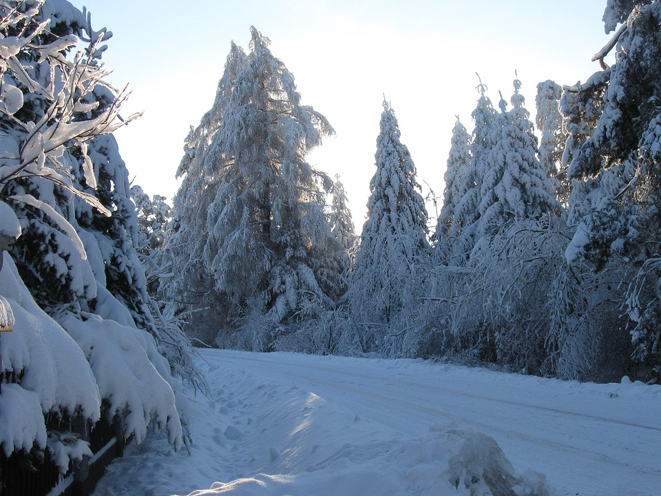 Winter, Way, Forest