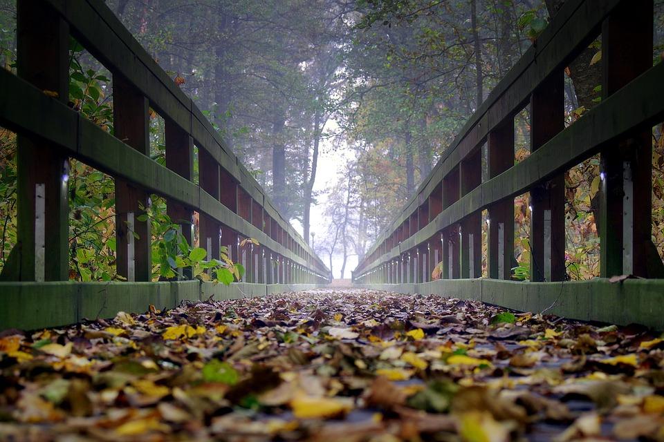 Bridge, Wooden, The Fog, Foliage, Far Away, Way, Forest