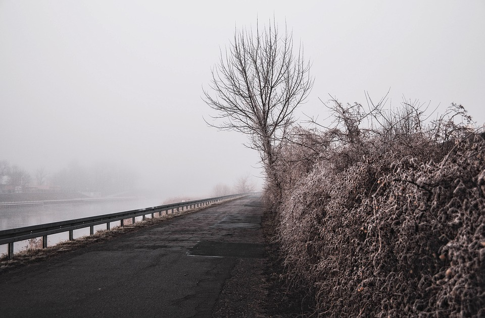 The Fog, Blurry, Morning, Nature, Tree, Way