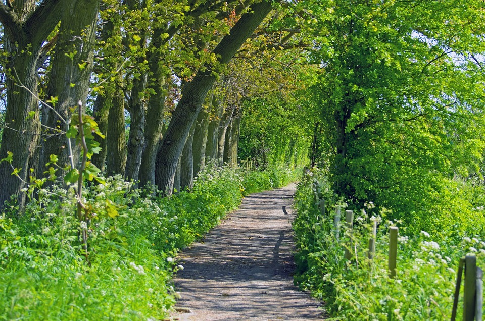 Scenic, Route, Way, Nature, Tree, Trees, Avenue, Green