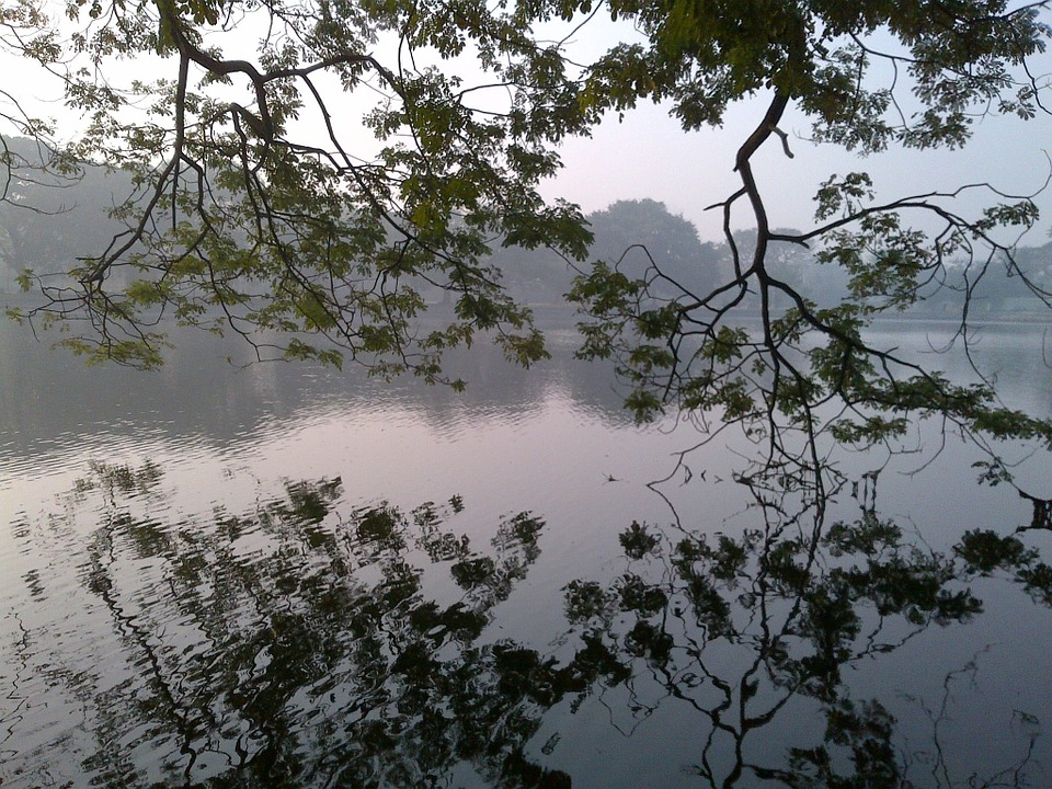 Lake, Water, Scenic, Nature, Trees, Misty, Weather, Sky