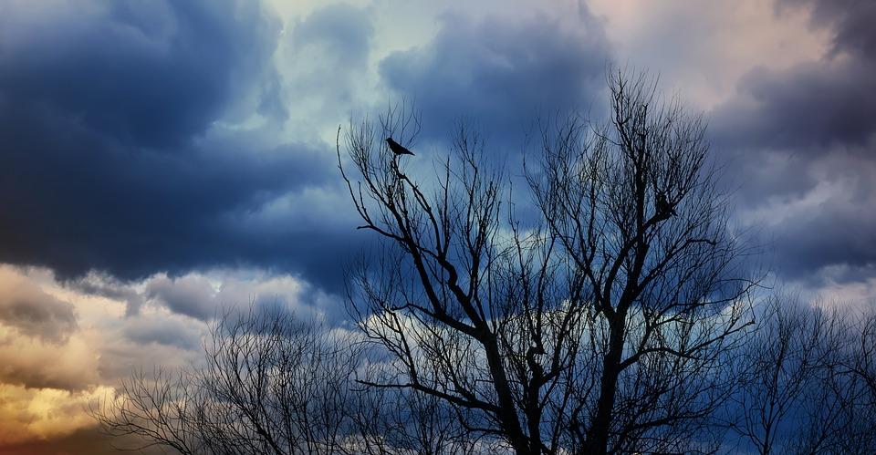 Nature, Tree, Landscape, Sky, Weather, Birds, Mood