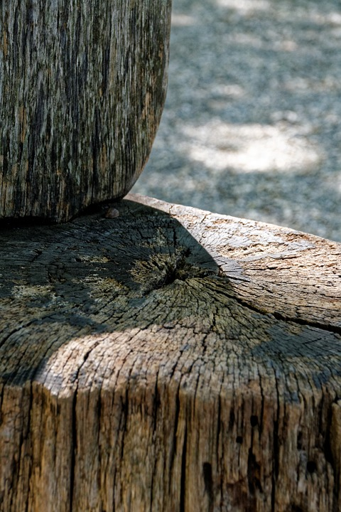 Wood, Chair, Seat, Weathered, Nature, Tree Stump