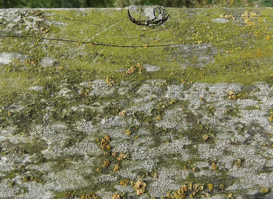 Moss, Wood, Weave, Board, Old, Weathered, Seaweed