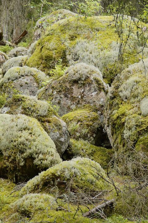 Moss, Weave, Nature, Stone, Vegetation, Forest, Rock
