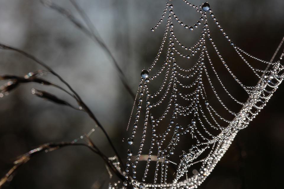 Web, Dew, Drops