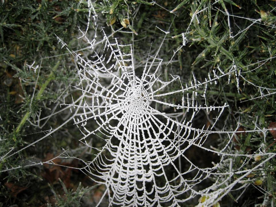 Web, Spider, Frost, White, Net