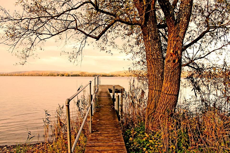 Web, Lake, Water, Nature, Trees, Landscape
