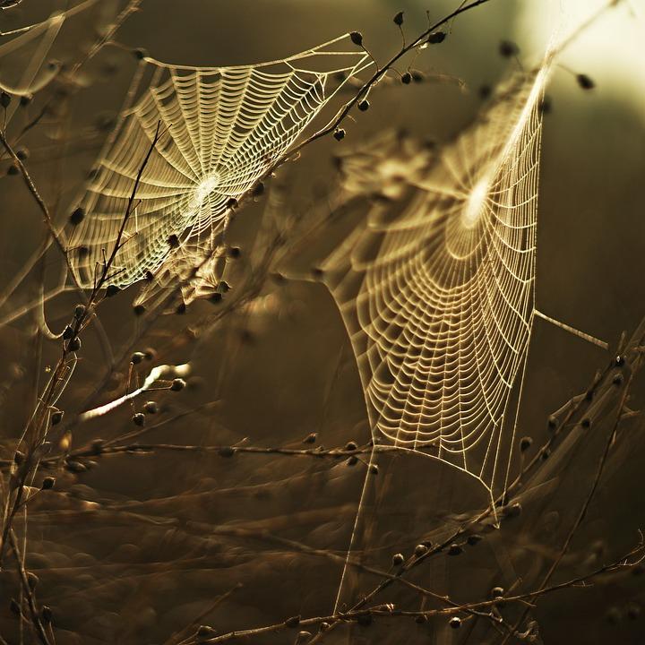 Meadow, Web, Sunset