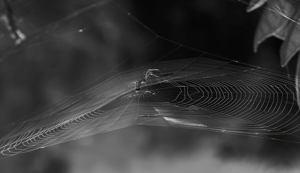 Nature, Black And White, Spider, Web, Insect