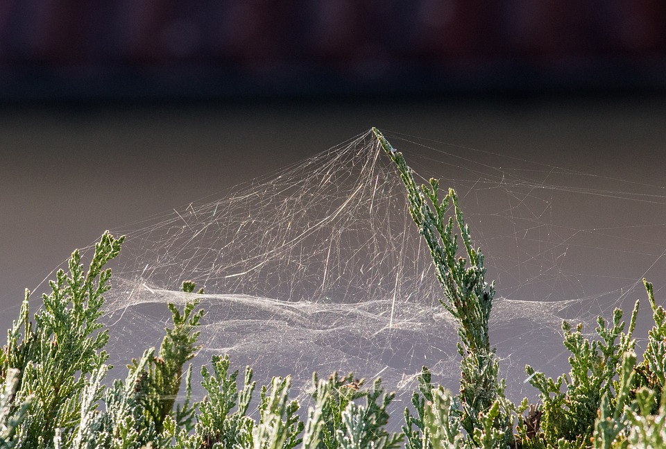 Spider Webs, Cobweb, Web, Nature, Autumn, Spin Threads