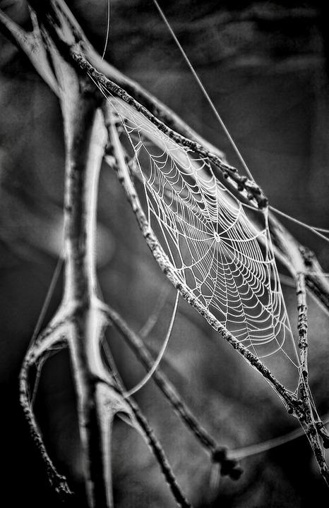 Cobweb, Spider's Web, Spiderweb, Web, Spider, Insect