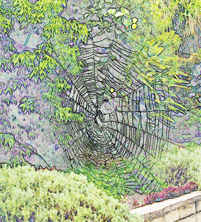 Web, Spider, Trap, Pattern, Cobweb