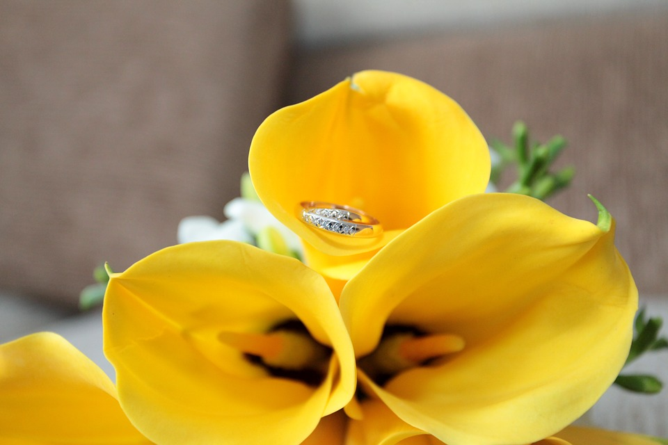 Free photo Wedding Calla Lilies Yellow Flowers - Max Pixel