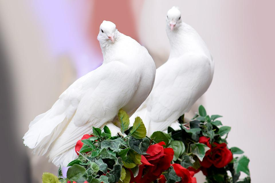 free photo wedding dove marriage nature love bird max pixel