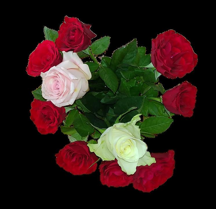 Rose, Bouquet, Love, Give, Petal, Romance, Wedding