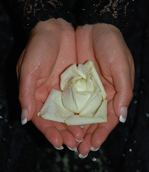 Hands, Roses, Hand, Finger, Wedding, Rings, Love