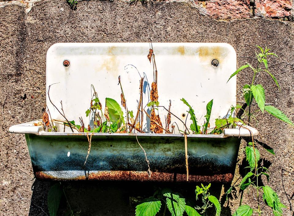 Bathroom Sink, Abandoned, Rust, Planting, Weed