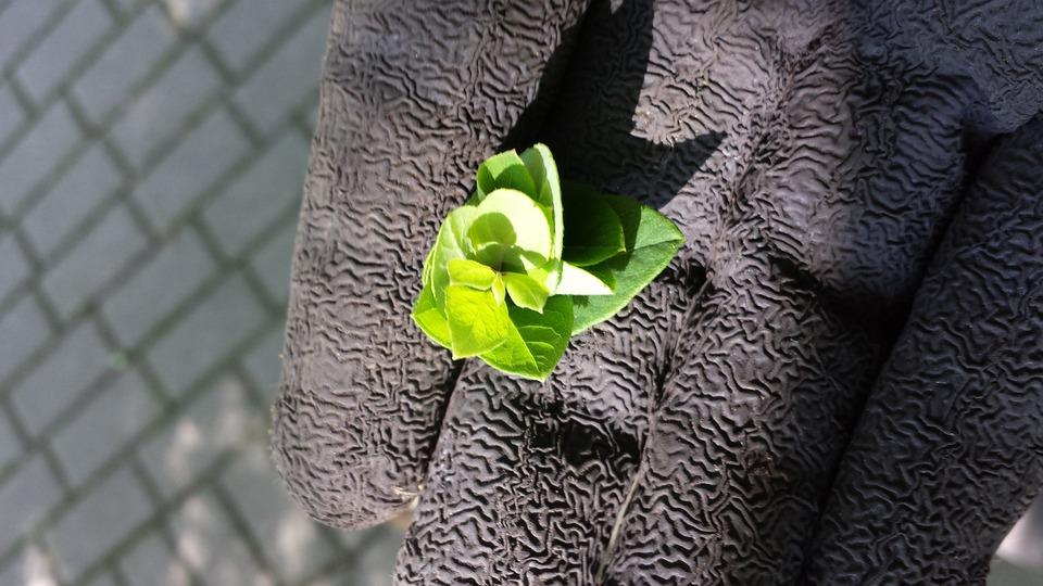 Gardener, Green, Plant, Hope, Gardeners, Weed, Frisch