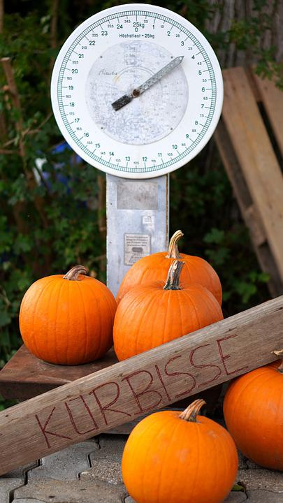 Weighing Scale, Pumpkins, Vegetables, Harvest, Weigh