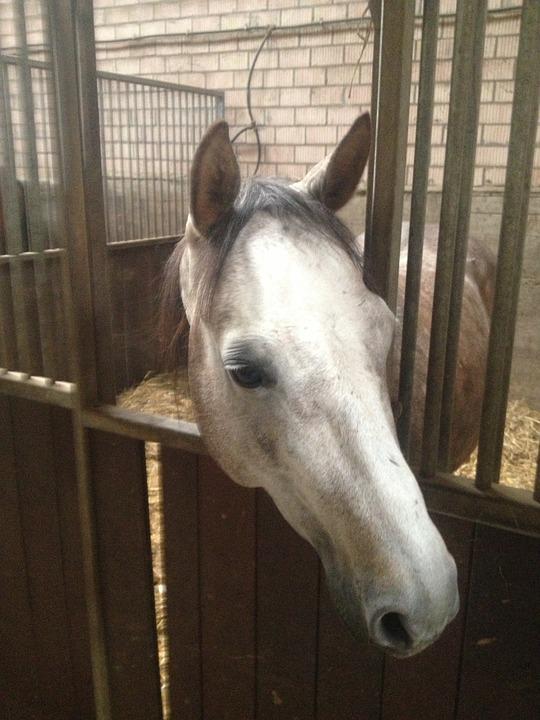 Horse, Ride, Equestrian, Animals, Mold, Western, Cowboy