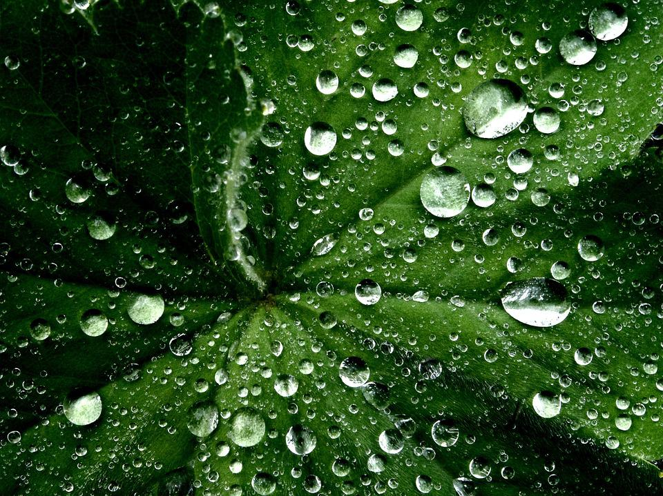 Leaf, Water Droplets, Wet, Nature, Environment, Macro