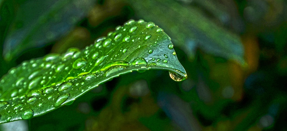 Nature, Sheet, Green, Wet, Water, Drops
