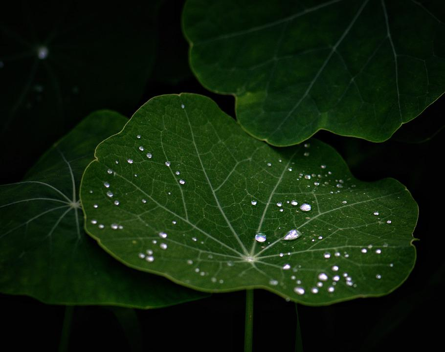 Dewdrops, Leaves, Leaf, Nature, Raindrop, Wet, Plant